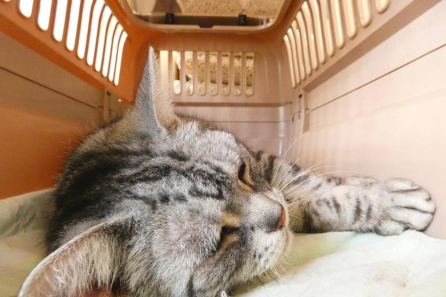 猫のお迎えセット