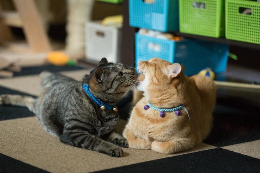 先住猫と仲良くさせる方法