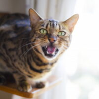 猫に起こされる時の対策!運動会や夜鳴き、朝起こしに来る理由を紹介