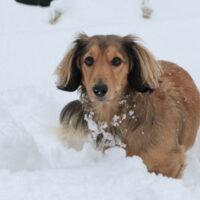 犬は寒さに強い?犬が過ごせる気温や寒さ対策について紹介!