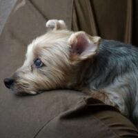 犬に留守番をさせるには?留守番に慣れる練習方法・吠える犬の対策