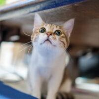 猫のお迎えに必要なものとは?飼う前に知っておくべき事を紹介!