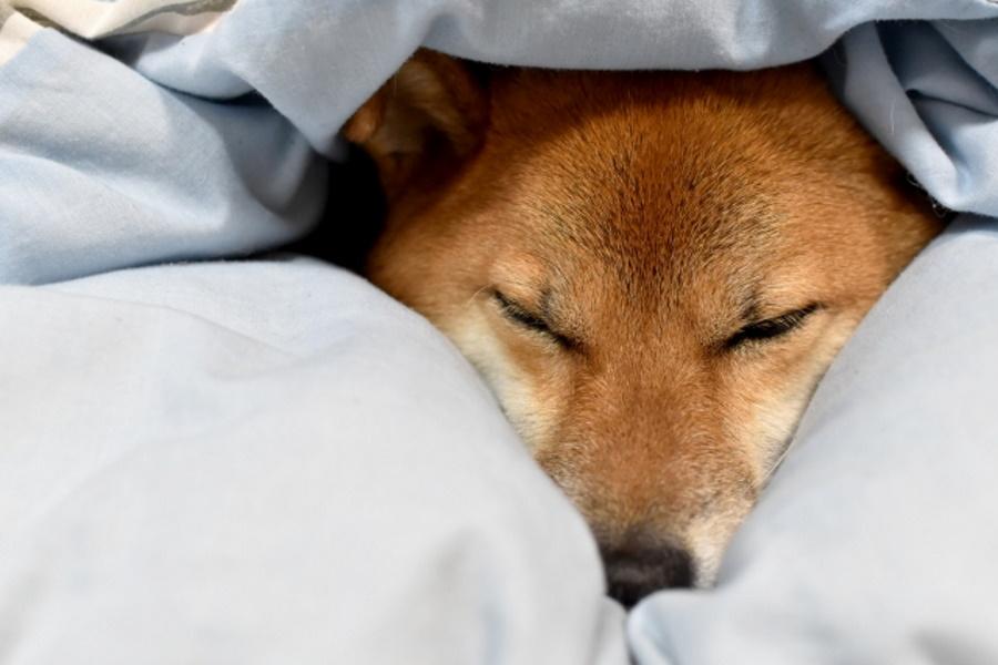 犬が寒い時のサイン