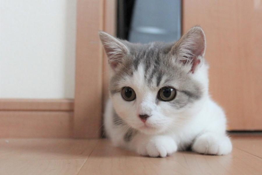 新入り猫を迎え入れる準備