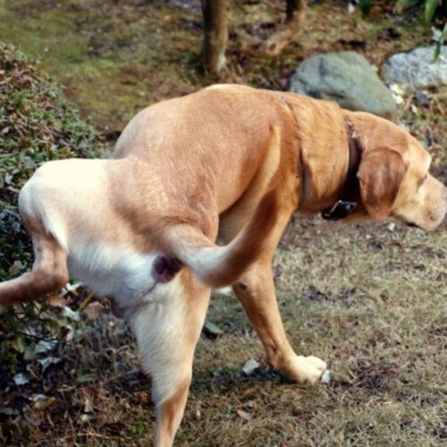 犬のマーキングをやめさせるには?マーキングした時の対処法を紹介!