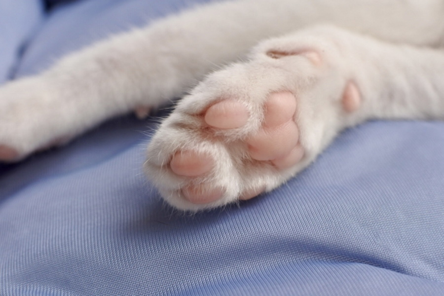 子猫の爪はどこまで切っていいの?