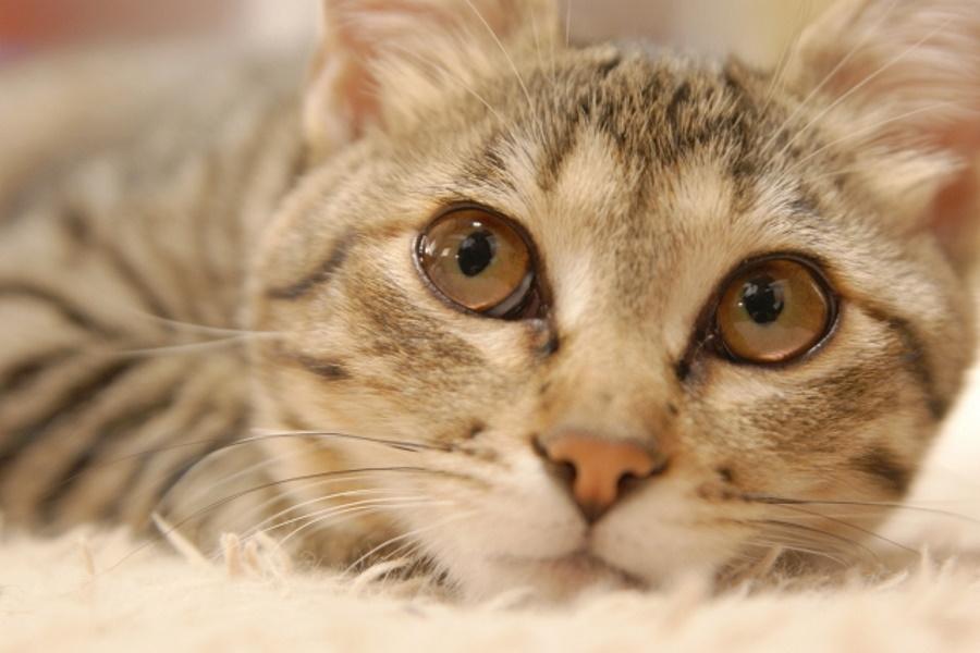 爪切りの時に猫が暴れる