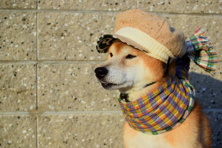 犬は寒さで下痢になる?