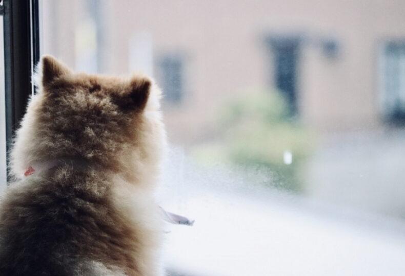 犬は雨の日でも散歩するべき?犬の雨具や注意点・雨天時の過ごし方