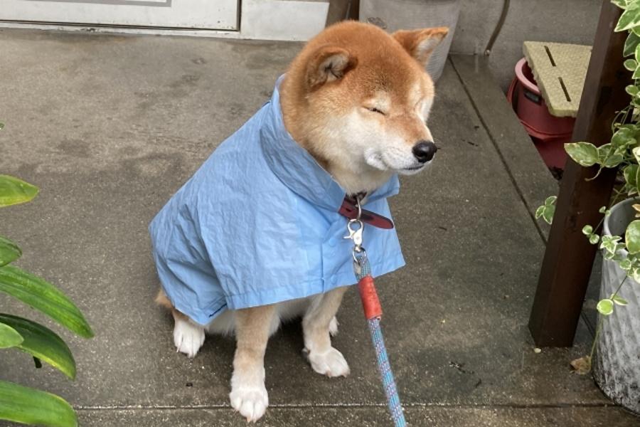 犬は雨嫌い?