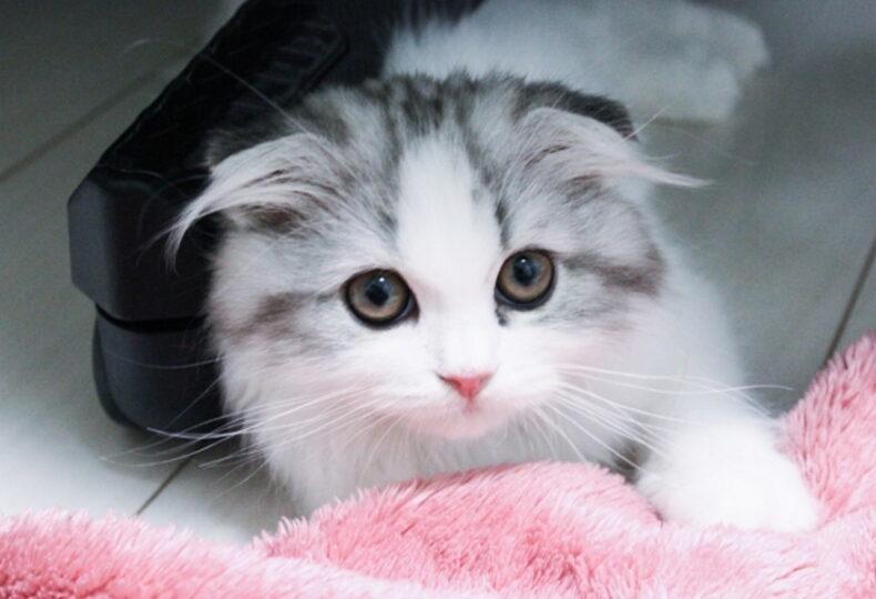猫との遊び方を解説!遊ぶためのコツや、おすすめのおもちゃを紹介!