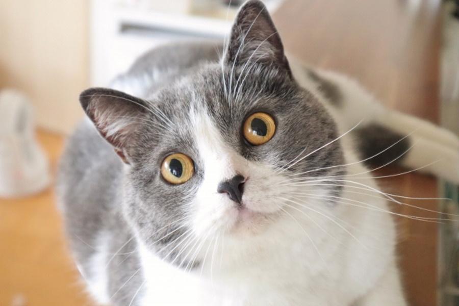 猫には霊が見える?