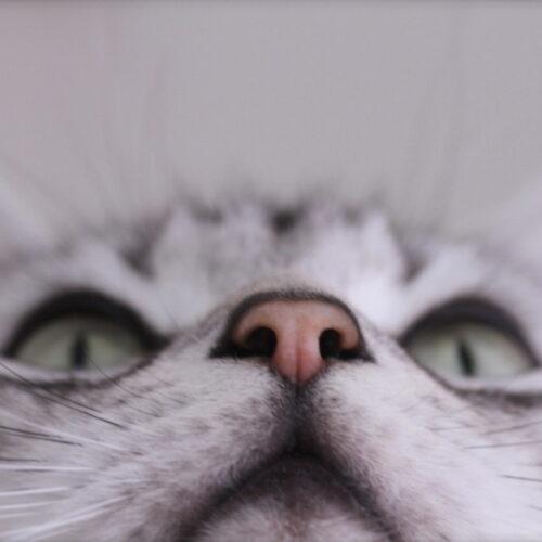 猫の鼻水は危険?猫が鼻炎になる原因や症状、予防方法を紹介!