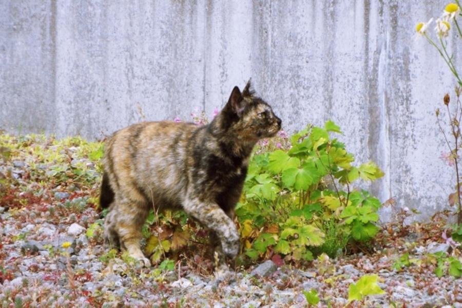 野良猫と家猫の違い