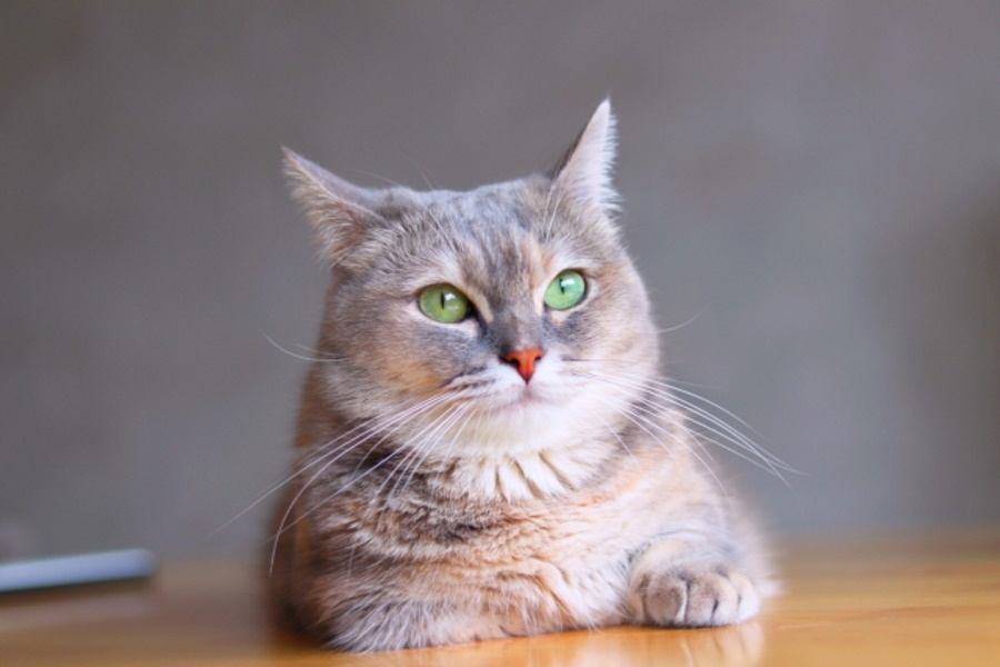 なぜ猫は邪魔してくるのか