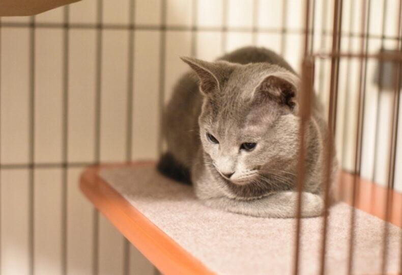 猫にケージは必要なの?ケージがあるメリット、飼い方の注意点
