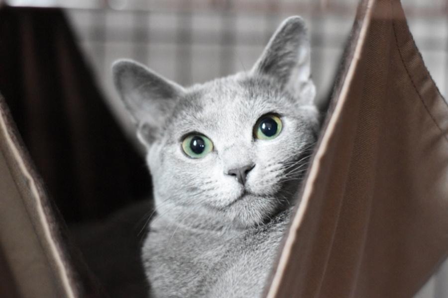 猫用ケージの種類