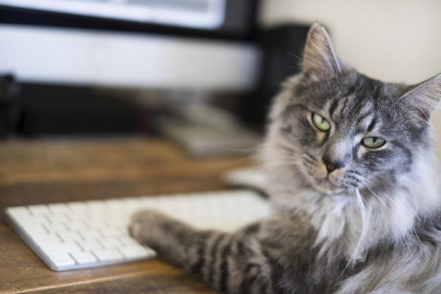 パソコンの邪魔をしてくる