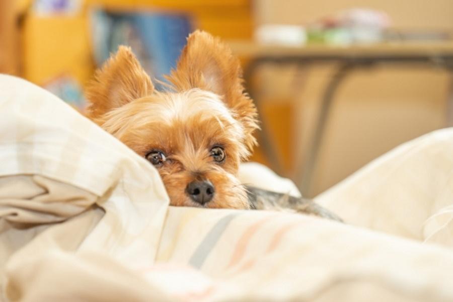 犬と寝るメリット