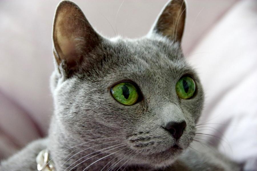 猫の鼻炎の原因