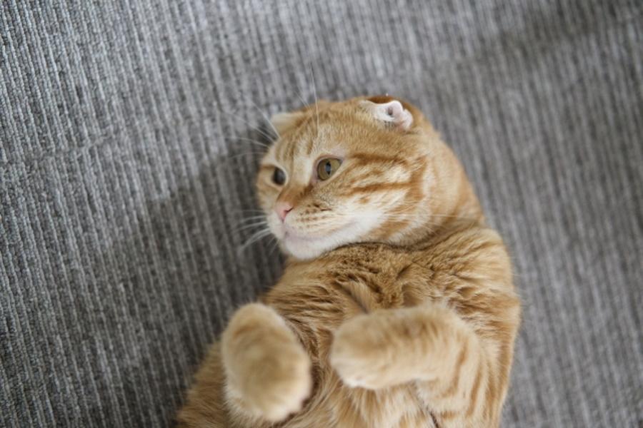 猫が嫌がる場合