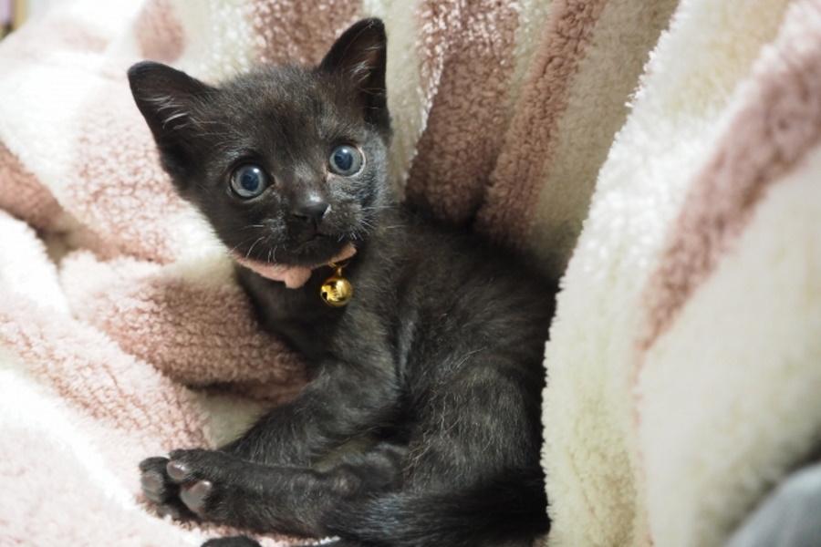 子猫のケージはいつまで必要?
