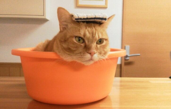 猫のお風呂の入れ方を解説!お風呂好きにさせる方法・暴れる猫対策