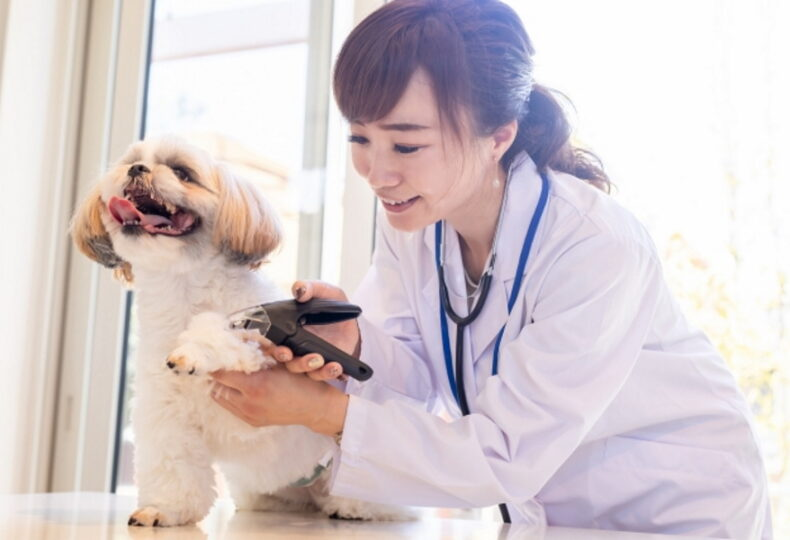 犬の爪の切り方を解説!爪切りの手順・暴れる犬を大人しくさせる方法