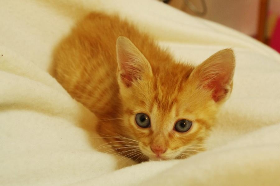 子猫・シニア猫と遊ぶ