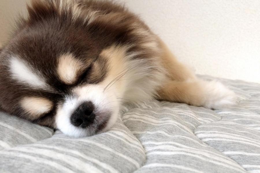 一緒に寝るのは犬にとって幸せ?