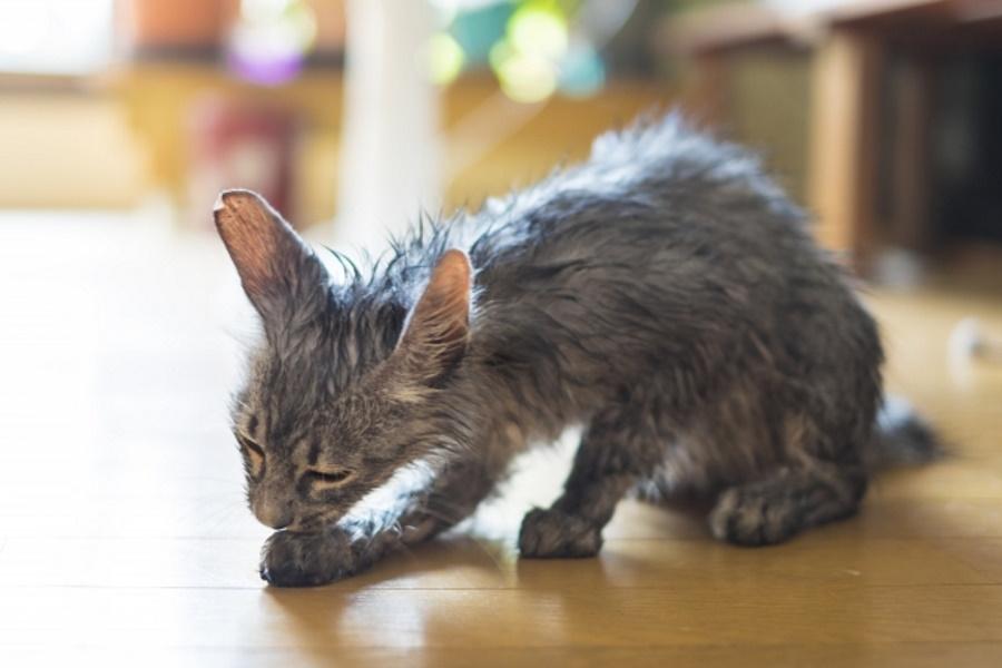 猫の乾かし方