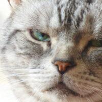 猫が唸る理由とは?猫の唸り方・状況ごとの対処法について紹介!
