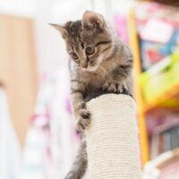 猫に爪とぎをしつけるには?しつけのやり方・爪とぎの対策を紹介!