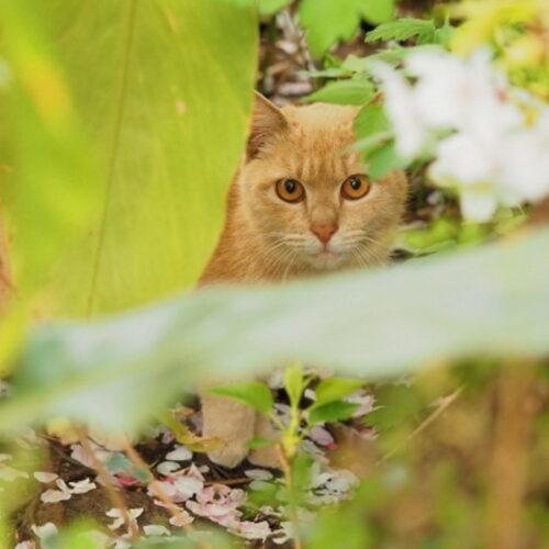 野良猫を飼うには?捕獲する前に知っておくべきこと・準備すること