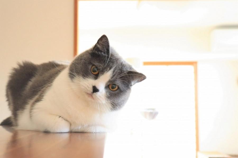 食事の邪魔をする猫