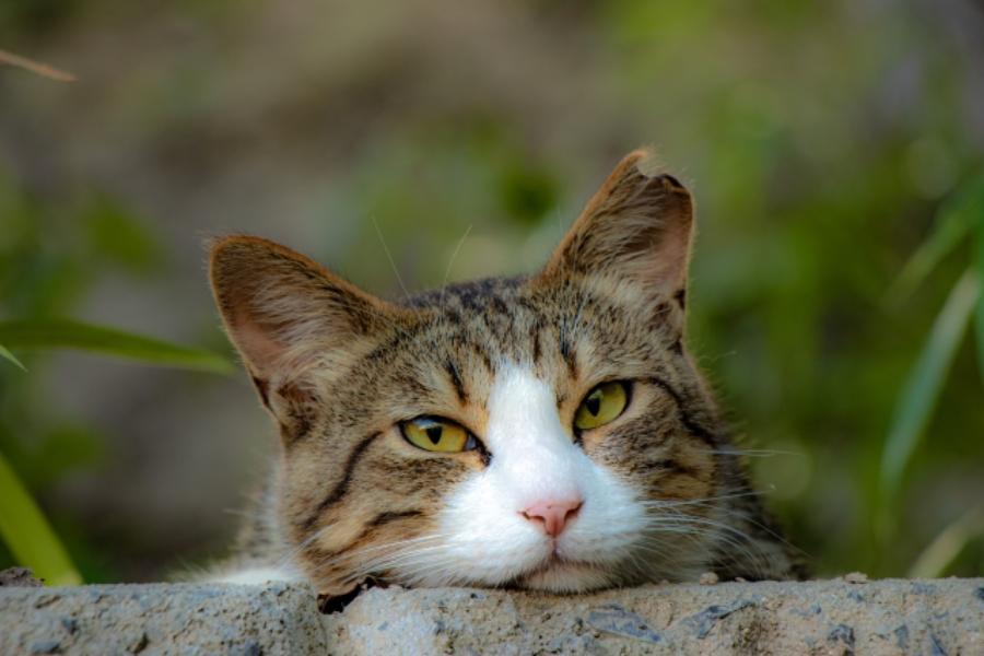 野良猫を飼うのは違法?